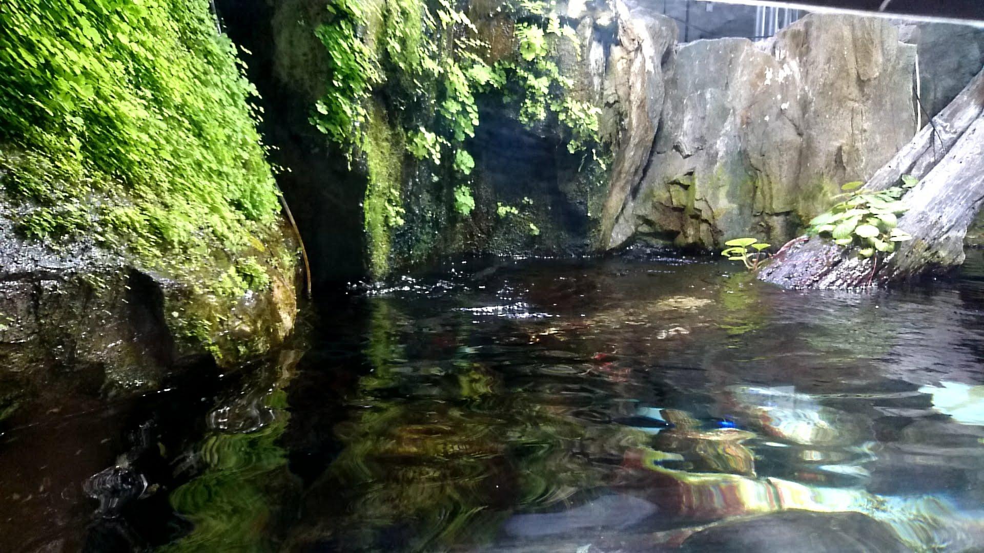 『吉祥寺にある水族館』孤独の水族館 #2