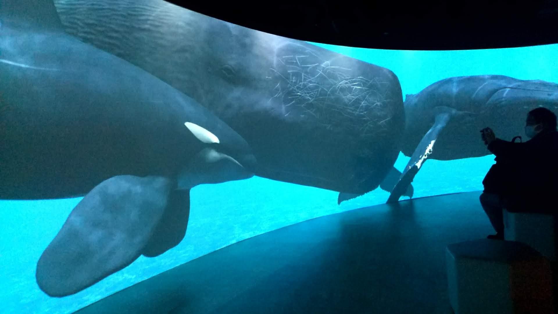 四国水族館から読み解く 『水族館未来の形』